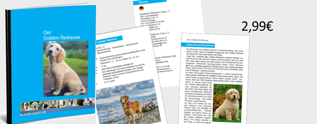 Inhaltsvorschau Ebook Golden Retriever