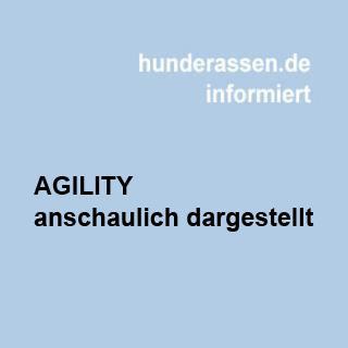 Agilty mit Hunden, ein Hundesport für die Fitness von Halter und Hund