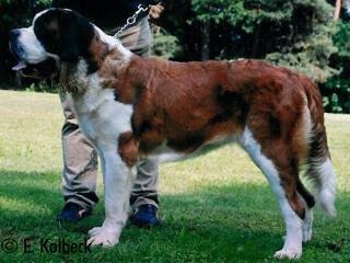 Freundlich, zuverlässig, wachsam, kinderlieb, Begleit- und Familienhund