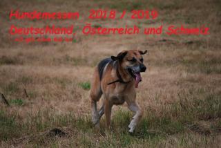 Hier findet ihr alle Termine zu stattfindenden Rasse- / Hundemessen mit Name, Ort und Zeitpunkt sowie einen Link für die noch nicht zeitlich festgelegten Messen ab Ende 2019