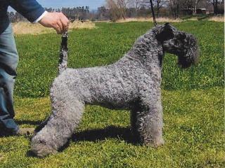 Temperamentvoll, freundlich, Haus- und Familienhund