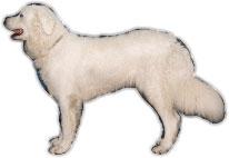 Starke Persönlichkeit, ausgeprägtes Randordungsempfinden,daher konsequente Erziehung nötig, temperamentvoll, zuverlässiger Wachhund, der Fremden gegenüber mißtrauisch ist.