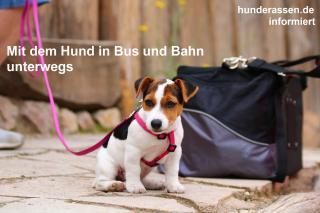 Nicht immer darf der Hund kostenlos mitfahren. Manchmal benötigt es auch mehr als ein Ticket/Billet - Unsere Links geben einen Auszug und Hinweise, worauf Sie bei Ihren Fahrten mit öffentlichen Verkehrsmittel achten sollten um keine bösen Überraschungen zu erleben