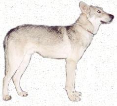 Eigenwillig, braucht konsequente Erziehung, kein Schutzhund