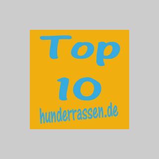 Top10 der beliebtesten Hunderassen bei hunderassen.de