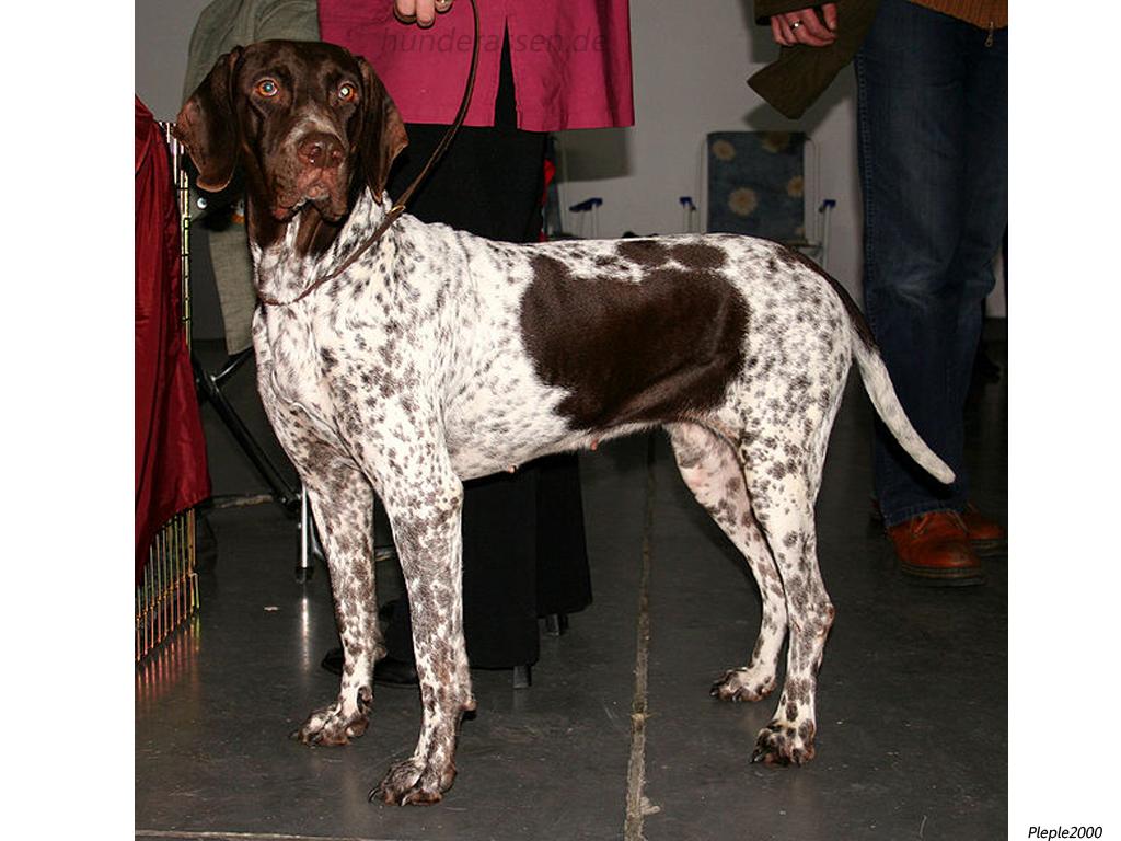 A Bloodhound To Die For Altdänischer H&#2...