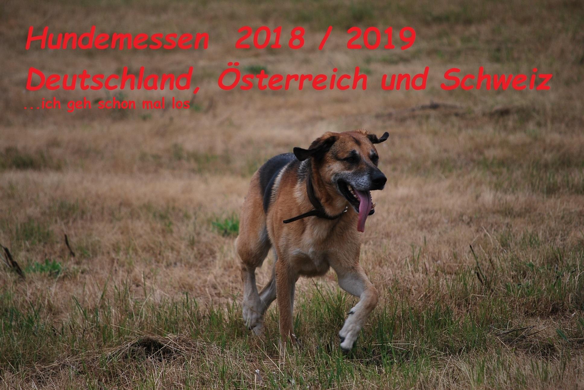 hundeausstellung dortmund 2019