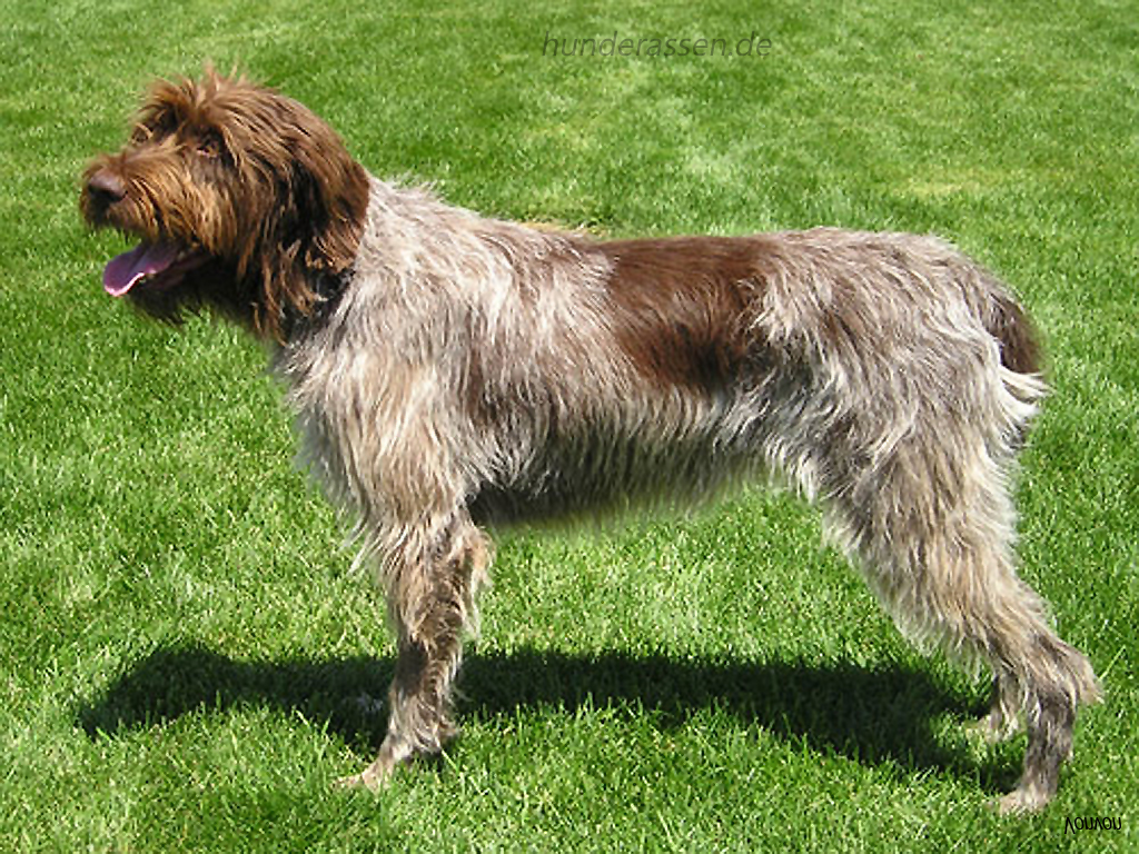 Pics Photos - Dog Breeds Bird Dog Breeds Mexican Dog Breeds Black Dog ... Xoloitzcuintli On Sale