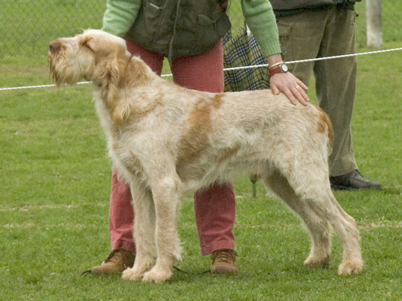 Show Pictures Of Hypoallergenic Dogs